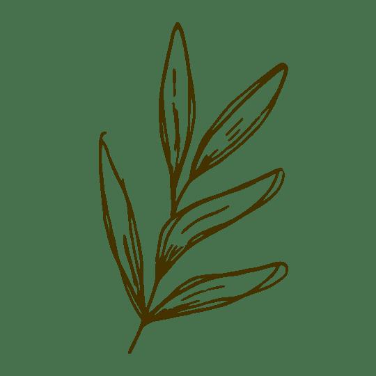 hoja olivo egaliaspirit